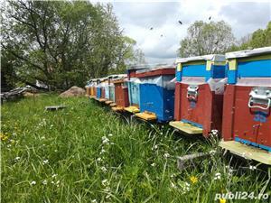 Vand sau schimb 25 familii de albine cu autoturism - imagine 2