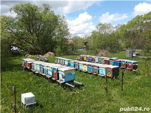 Vand sau schimb 25 familii de albine cu autoturism - imagine 4