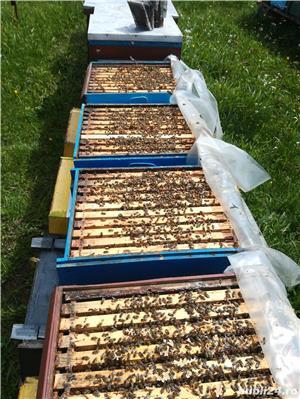 Vand sau schimb 25 familii de albine cu autoturism - imagine 3