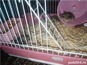 Vand hamsteri siberian pitici - imagine 2