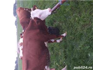 Vand vaca!! - imagine 3
