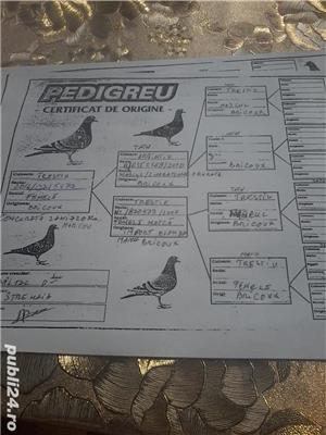 porumbei voiajori  cu origini bune - imagine 10