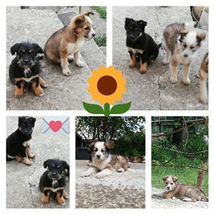 Catei Adoptie - imagine 1