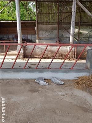 Vand 88 metri gard pentru delimitarea zonei de hrănire a vacilor talie mare, 110 capete.  - imagine 4