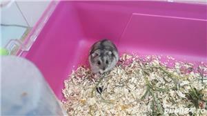 Cusca hamsteri + 1 hamster - imagine 2