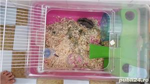 Cusca hamsteri + 1 hamster - imagine 4