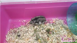 Cusca hamsteri + 1 hamster - imagine 3