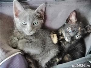 pui de pisica spre adoptie - imagine 1