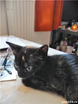 pui de pisica spre adoptie - imagine 3