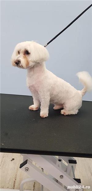 Tuns caini Timisoara salon canin - imagine 2