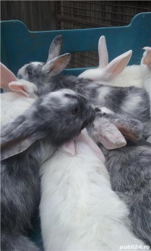 vand iepuri - imagine 7