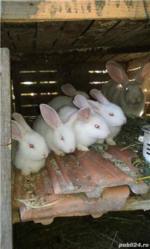 vand iepuri - imagine 8