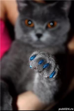 Unghiuțe Căpăcele Unghii Pisici - imagine 2