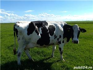 Vand vacii - imagine 2