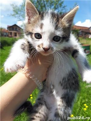 Adopție pisici - imagine 5
