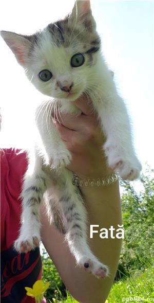 Adopție pisici - imagine 10