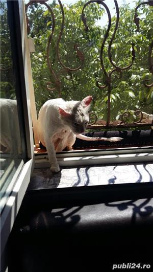 Cosmetica canina la domiciliu - imagine 2