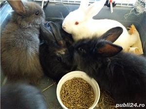 Vand iepuri pitici Pitesti  - imagine 3