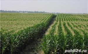 Vând Fermă Agricolă Vegetală   - imagine 3