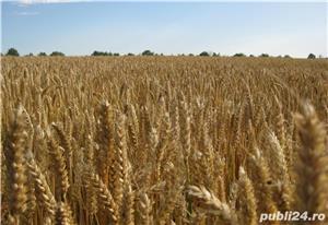 Vând Fermă Agricolă Vegetală   - imagine 5