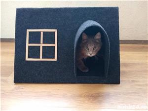 Casuta pentru pisici sau catei de talie mica - imagine 1