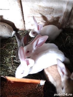 Vind iepurii haycol  - imagine 1
