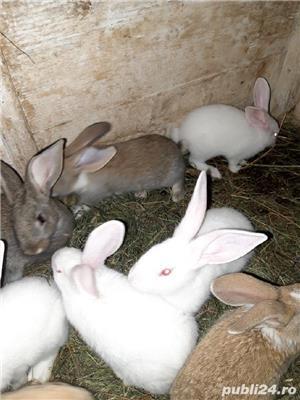 Vind iepurii haycol  - imagine 3