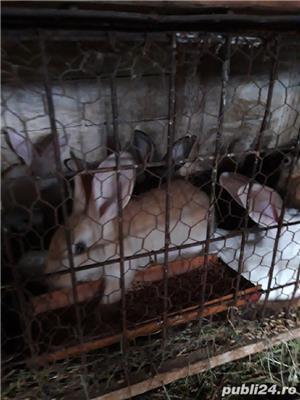 Vind iepurii haycol  - imagine 4