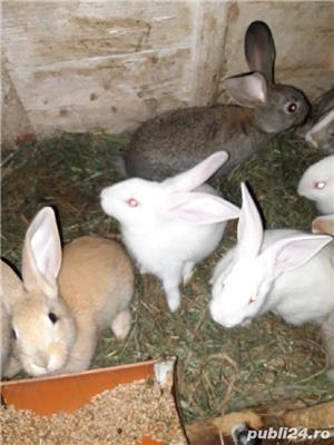 Vind iepurii haycol  - imagine 5