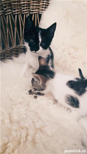 Donez pisici - imagine 1