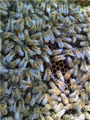 ‼️Vand familii albine SUPER pret‼️ - imagine 1
