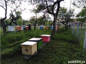 ‼️Vand familii albine SUPER pret‼️ - imagine 7