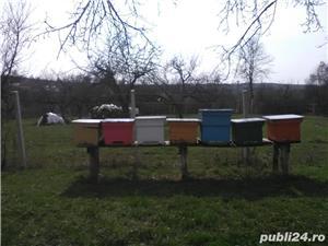 ‼️Vand familii albine SUPER pret‼️ - imagine 5