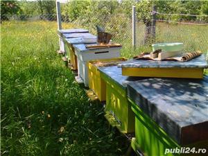 ‼️Vand familii albine SUPER pret‼️ - imagine 6