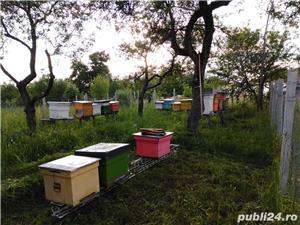 ‼️Vand familii albine SUPER pret‼️ - imagine 10