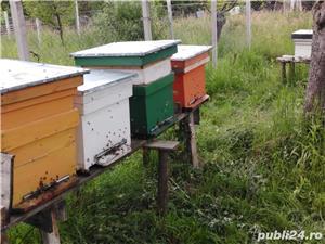 ‼️Vand familii albine SUPER pret‼️ - imagine 8