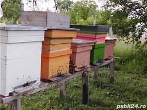 ‼️Vand familii albine SUPER pret‼️ - imagine 9