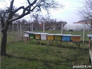 ‼️Vand familii albine SUPER pret‼️ - imagine 4