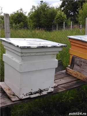 ‼️Vand familii albine SUPER pret‼️ - imagine 2