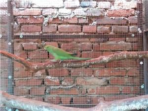 Vand Papagali - imagine 4