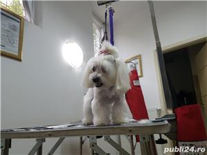 Tund câini și pisici la domiciliul clientului in București si Ilfov/Groomer/ Tuns caini/ Tuns pisici - imagine 14