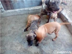Ofer Pensiune canina Cazare canina Cazare pentru caini Giurgiu - imagine 6