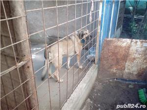 Ofer Pensiune canina Cazare canina Cazare pentru caini Giurgiu - imagine 3