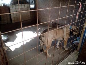 Ofer Pensiune canina Cazare canina Cazare pentru caini Giurgiu - imagine 7