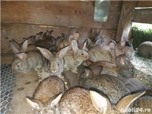Vand iepuri - imagine 2