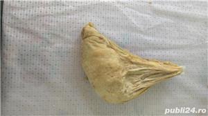 Vand CHEAG de provenienta animala 100ron/kg - imagine 4