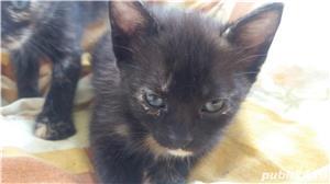 pui de pisica spre adoptie - imagine 6