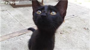pui de pisica spre adoptie - imagine 5