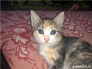 Donez pui de pisică - imagine 3