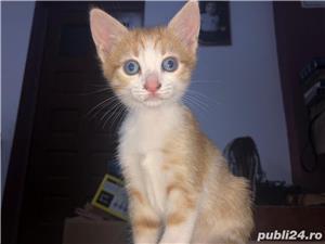 Donez pui de pisică - imagine 2